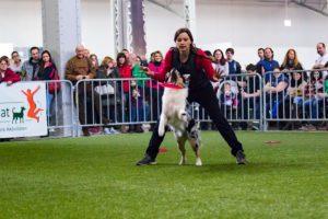 Veranstaltungsfotos: Diskdogging Vorführung Haustiermesse