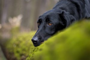 Tierfotos: Lio, Bracken Mischling