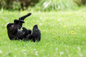 Tierfotos: Susi, Labrador Mischling